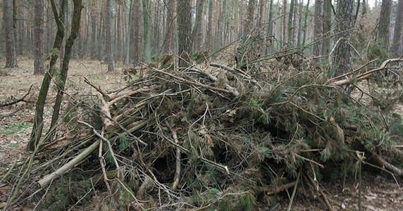 Opportunities for harvesting wood fuel in the forests of Ukraine – 19th Position Paper of UABio